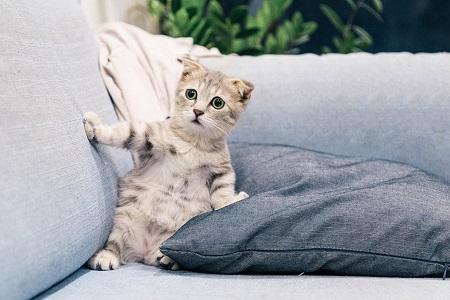 חברת הרהיטים האשימה את החתול