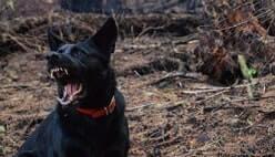 פסק דין של תביעה קטנה נשיכת כלב